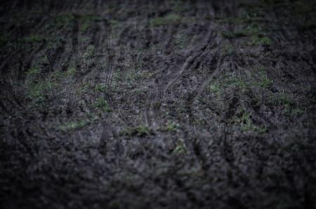 GJØRMEBAD: Her var det gress da vi kom, noe som brått ble til gjørme. I morgen er det meldt regn, med fare for mye løping.