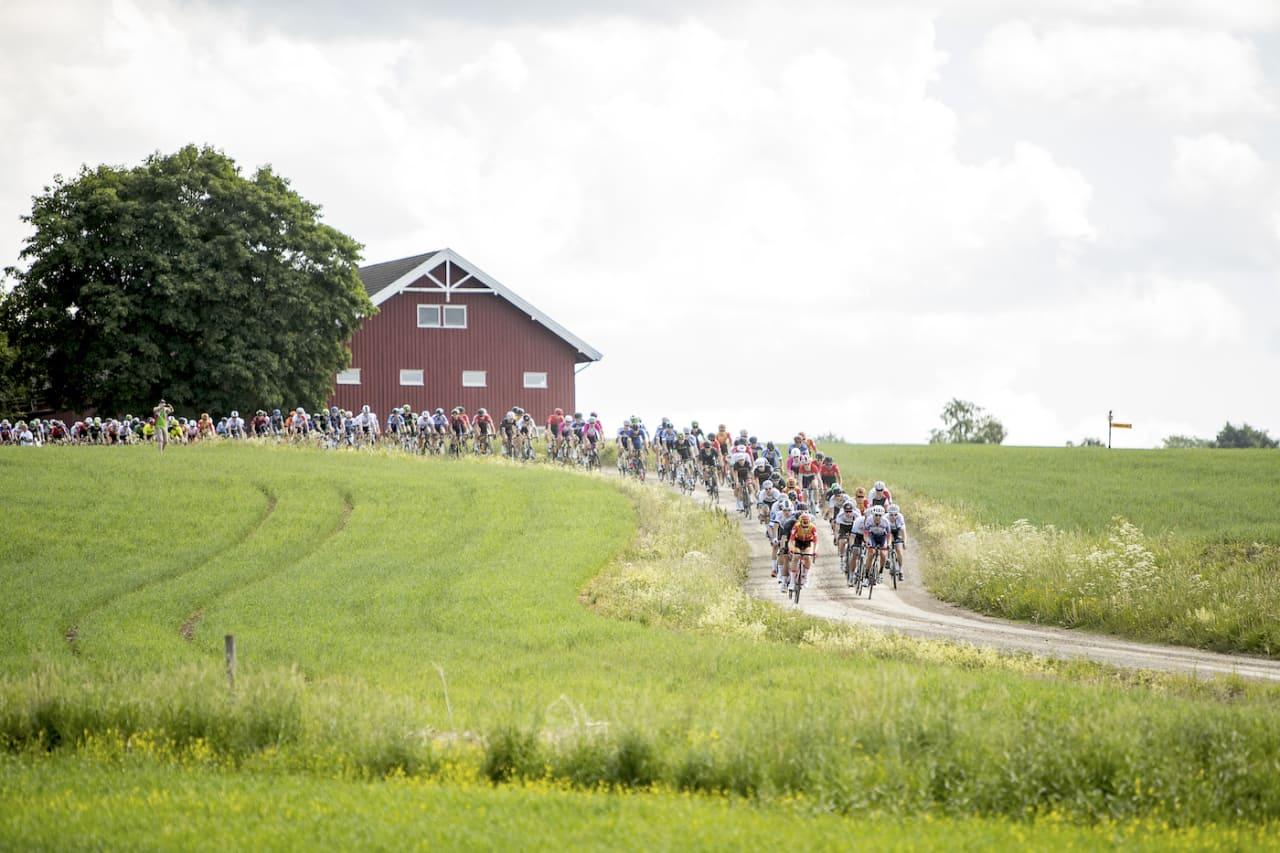 GYLNE GUTUER: Klassikeren på Hedmarken er et vakkert skue. Foto: Pål Westgaard