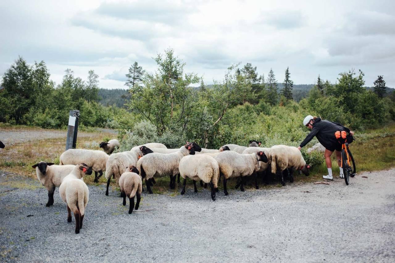 DYRETEKKE: Signe Koch har naturlig anlegg for dyr, og på fjellpartiene over og vest for Dalen, fikk hun vist sin eminente lokketeknikk med sportsbarer og godlyder.
