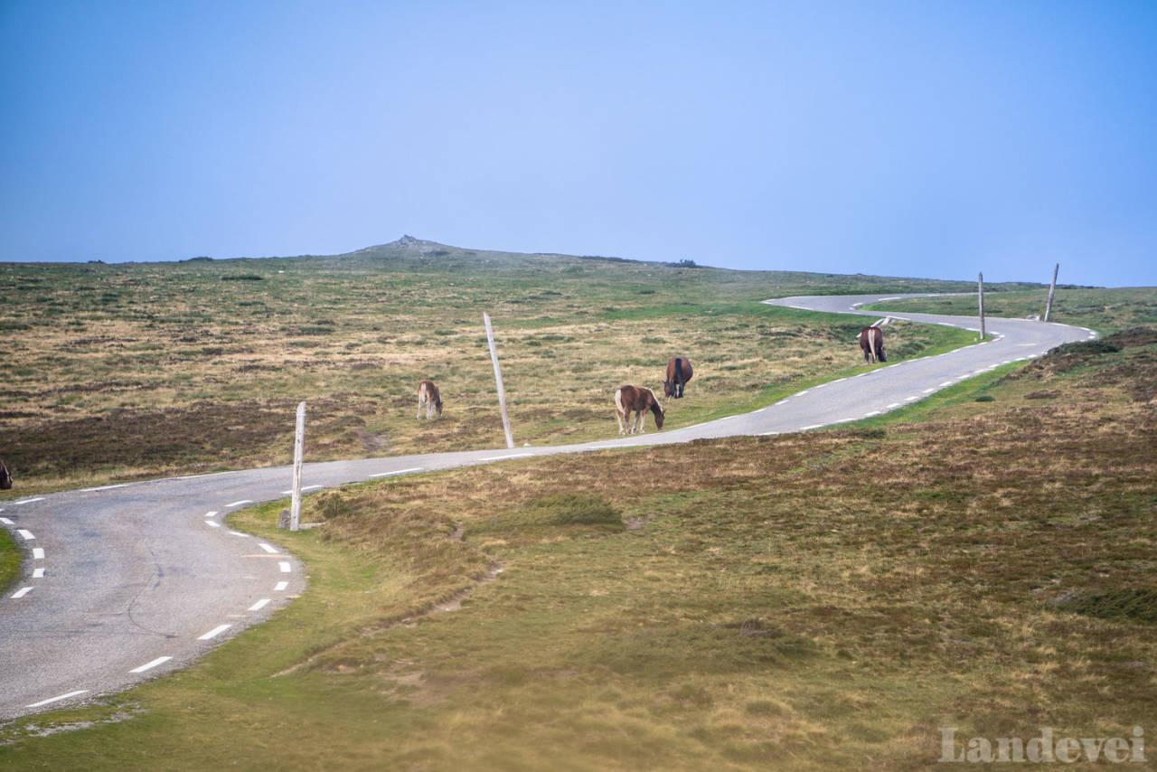 FORLATT FJELL: Col de Paillheres er et fjell så øde at hestene går på beite på toppen.