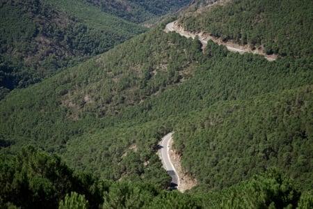 HERLIG: Flotte veier slynger seg gjennom furuskogen opp Alto de Penas Blancas.