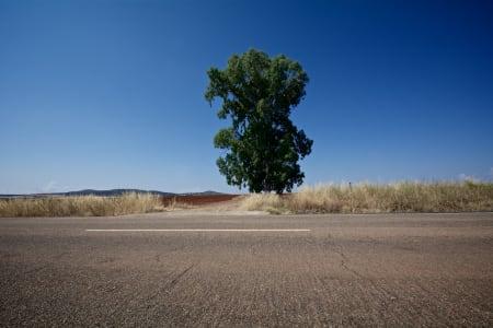 ENSOM MAJESTET: Alene i veikanten, men tilskuer til stor idrett på het asfalt i Spania.